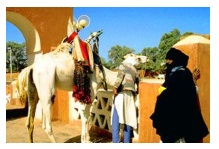 Алжир население
