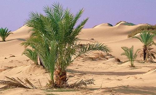 Арабский язык Тунис пустыня Сахара