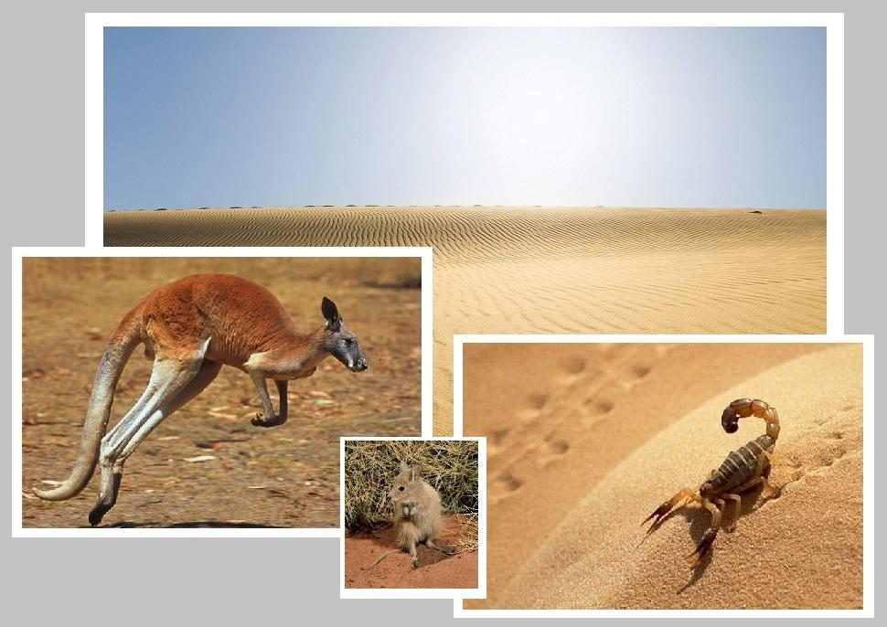 Кенгуру, скорпион и Сахара