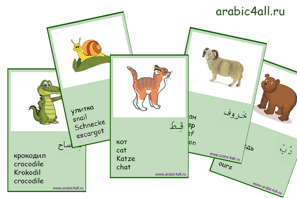 arabic4all.ru - cards