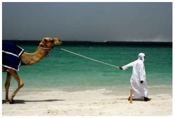 Бахрейн образование